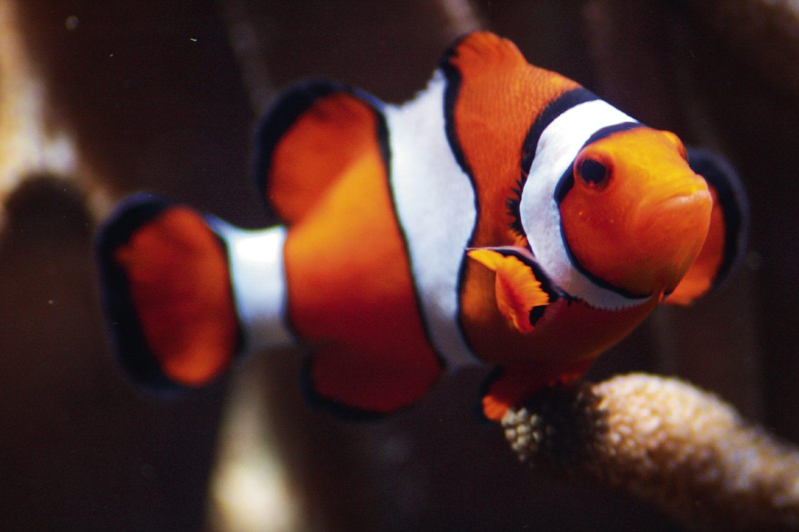 endlich wieder abtauchen im aquarium berlin  clever kids
